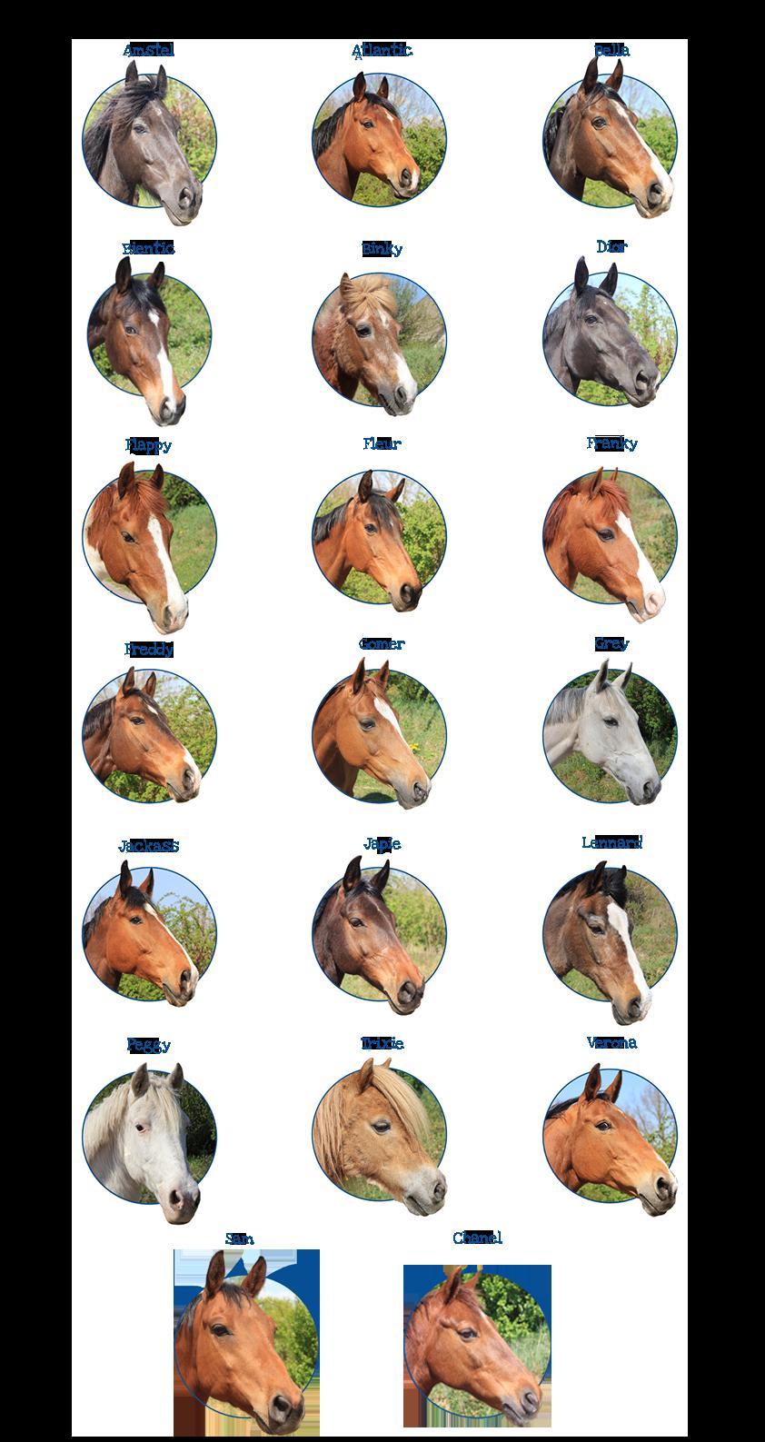 Dit zijn onze paarden